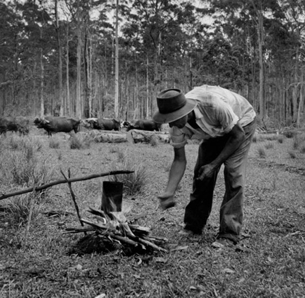 The Bullocky with Campfire, Telegraph Point, 1954