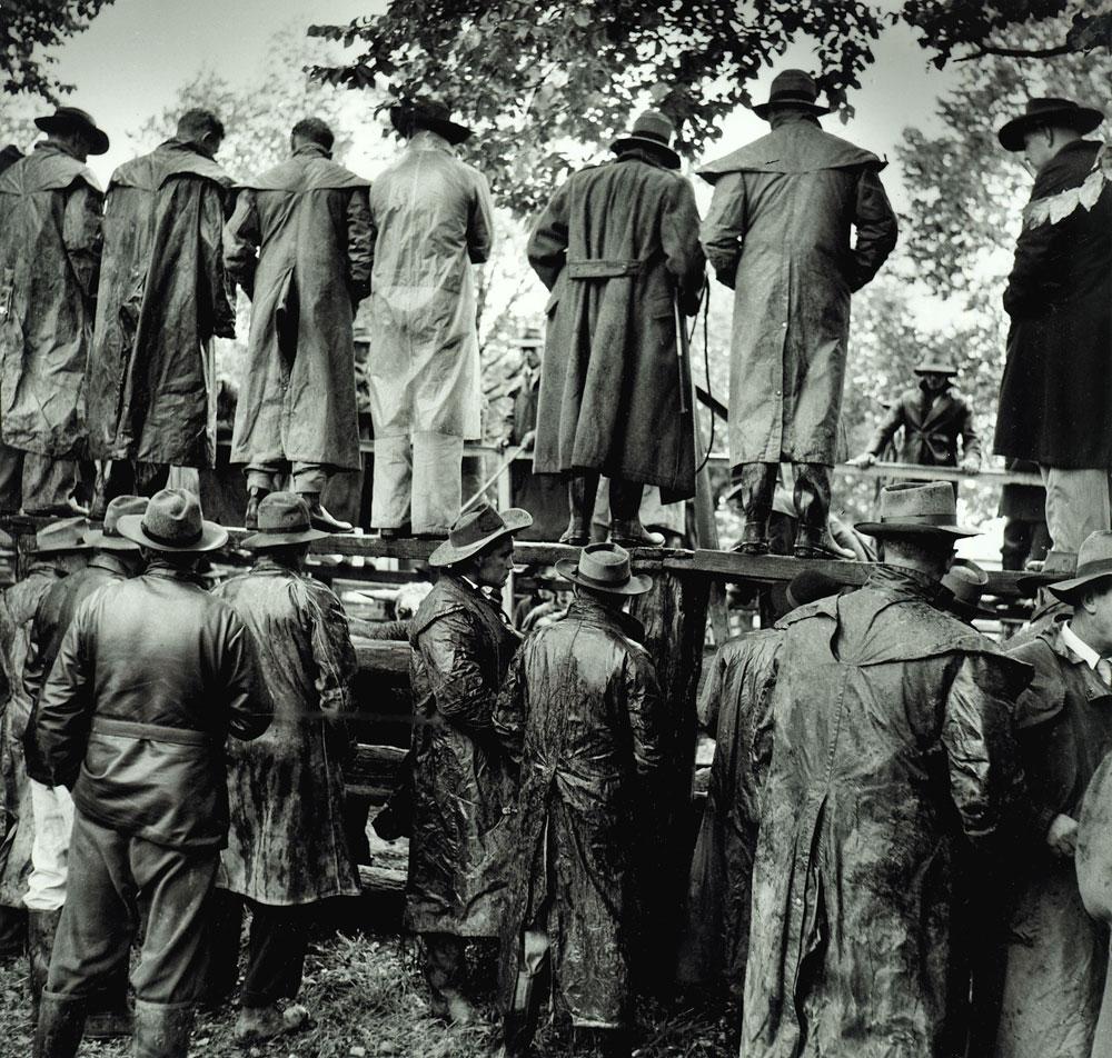 Cattle Sale, Wangaratta, 1956