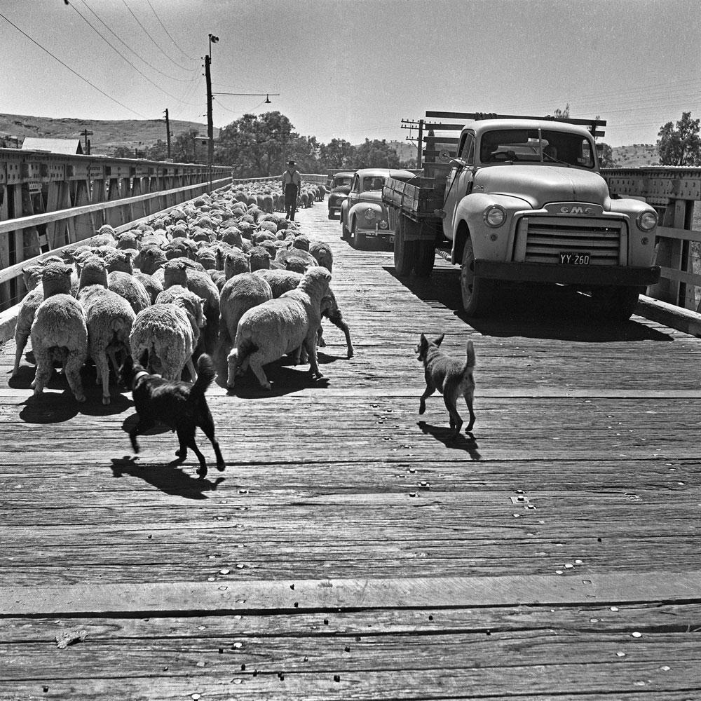 The Bridge at Gundagai c.1953