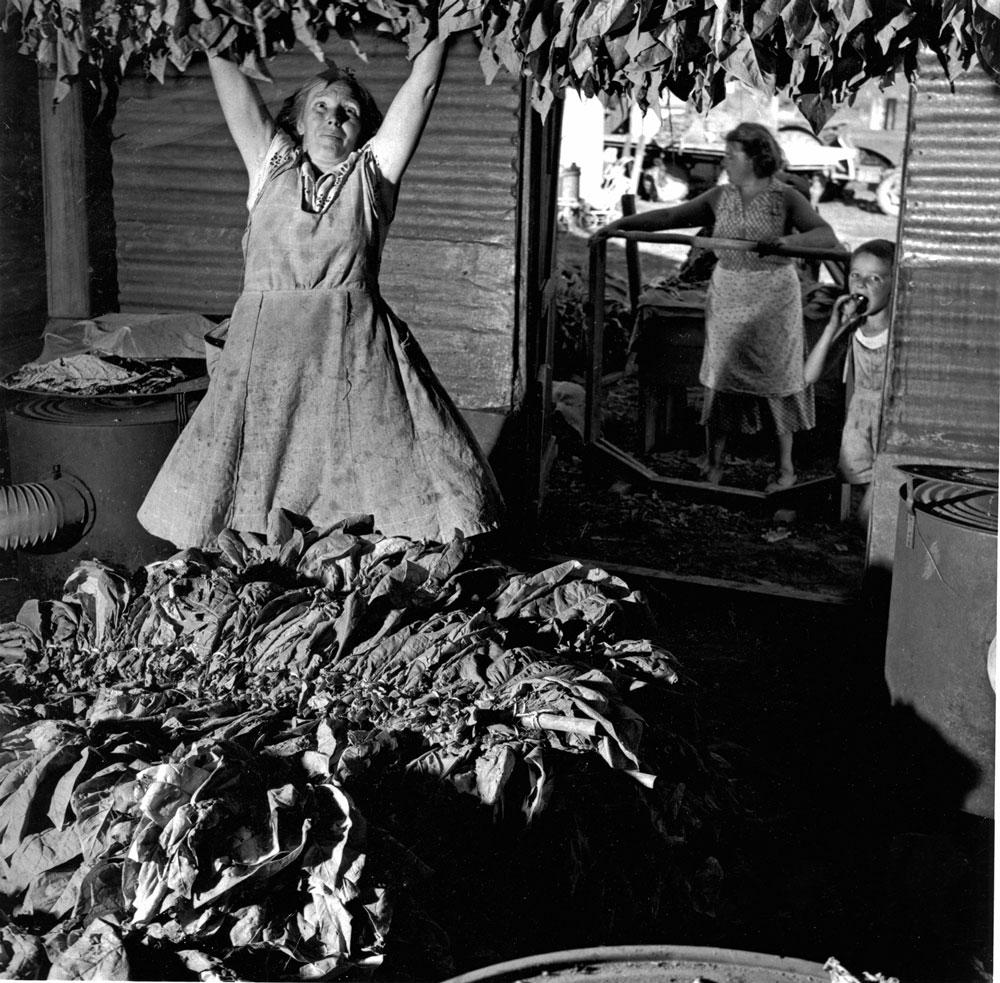 Loading the Kiln, Ovens Valley, 1956