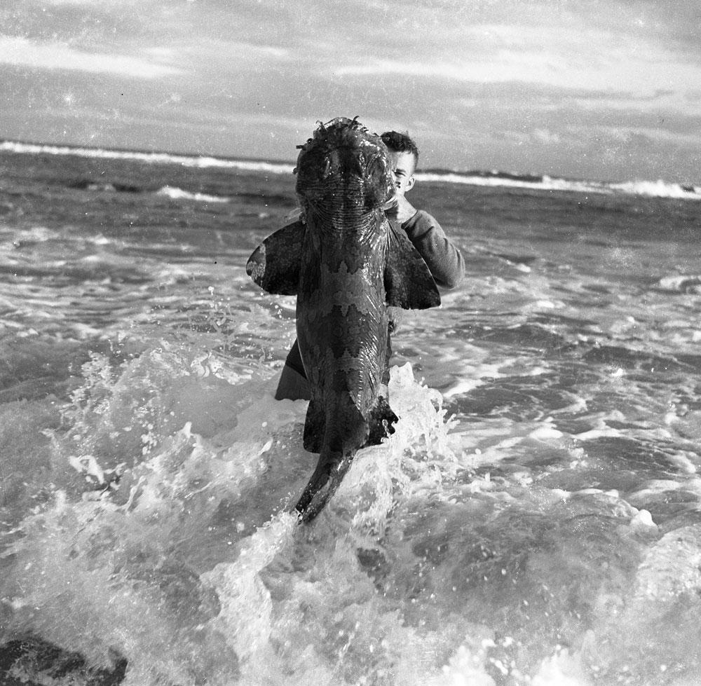 Spearfishing c.1968